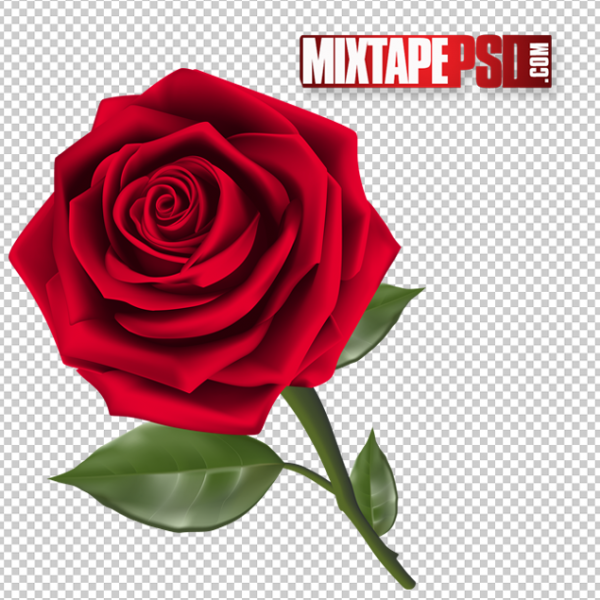 Beautiful Rose PNG