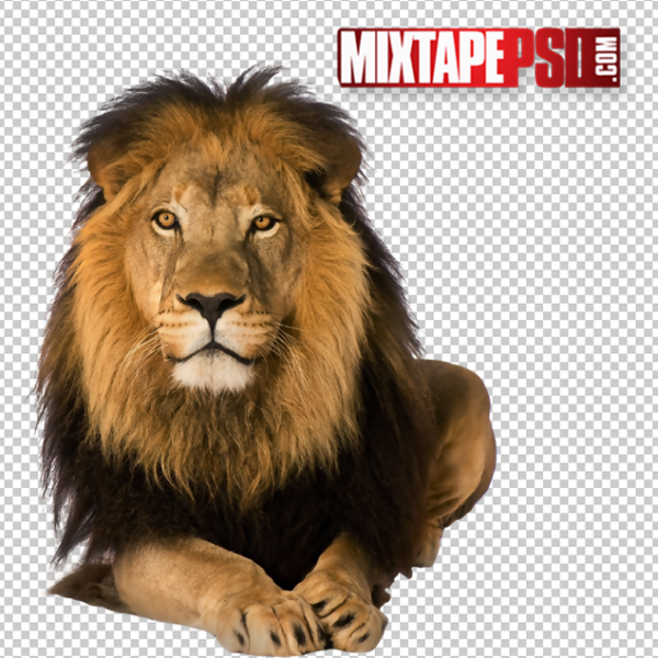 Male Lion PNG 2