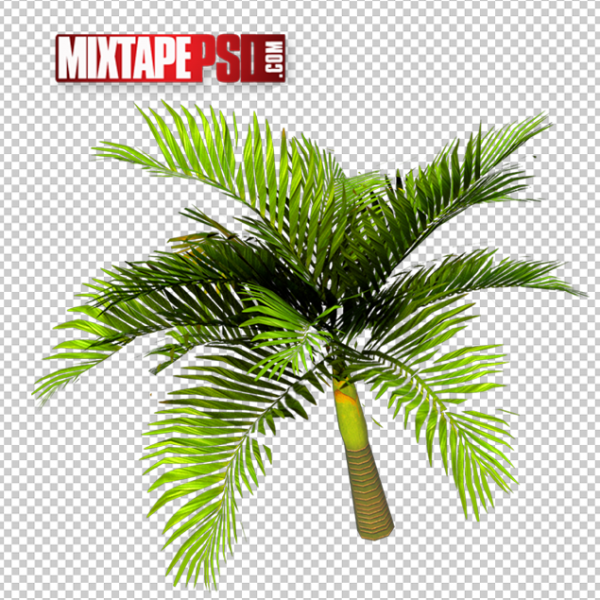 Palm Trees PNG 2