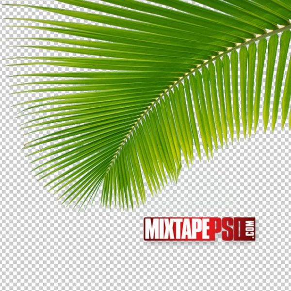 Palm Trees PNG 3