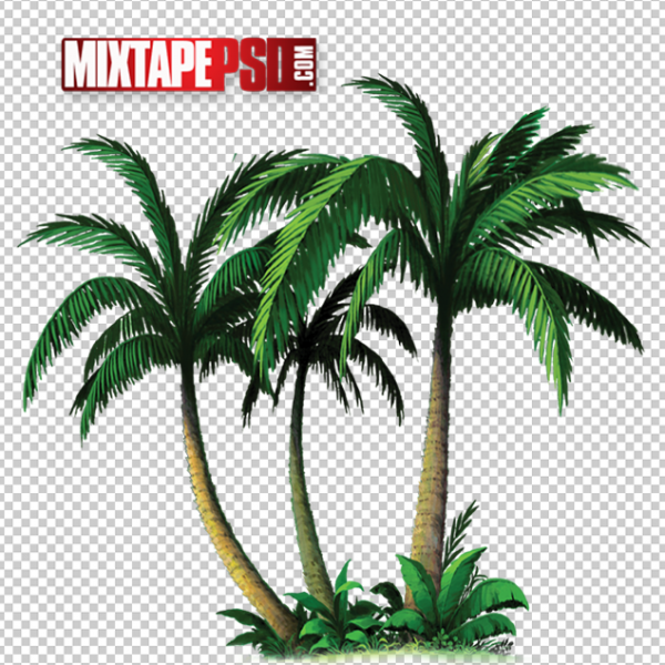 Palm Trees PNG 5