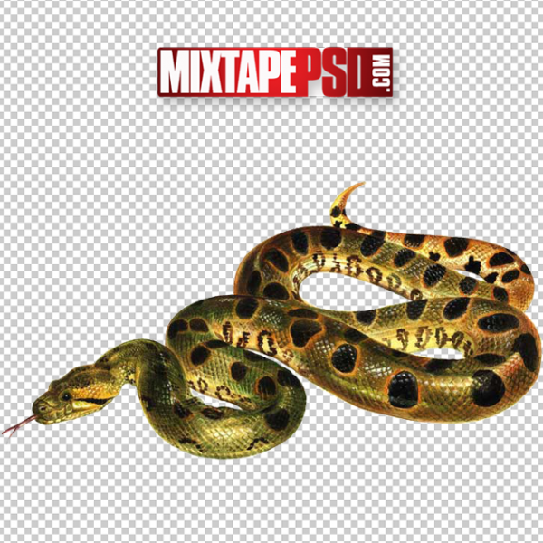 Anaconda Snake Cut PNG, Officialpsds, Officialpsd, png images free, png images transparent background, png images hd, png images for photoshop, png images website, png images for free download, png images download, png images background, png images examples, png images for editing, png images for download, PNG Images