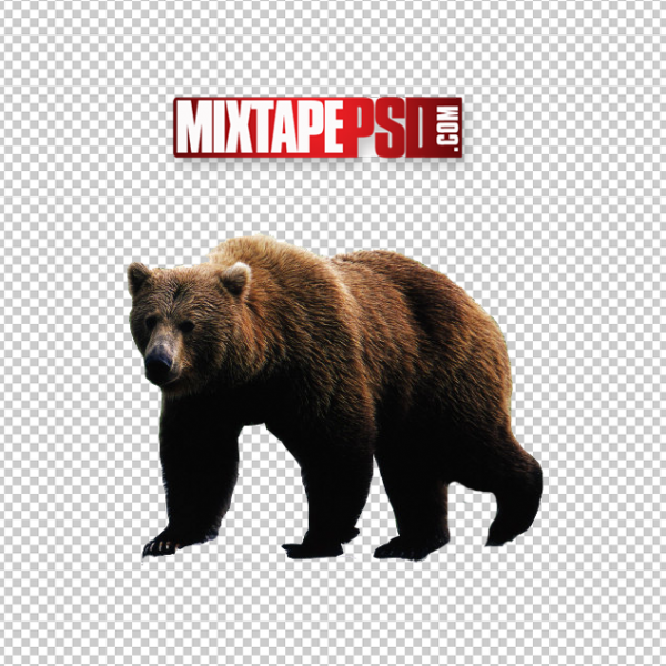 Bear Cut PNG 2, Officialpsds, Officialpsd, png images free, png images transparent background, png images hd, png images for photoshop, png images website, png images for free download, png images download, png images background, png images examples, png images for editing, png images for download, PNG Images