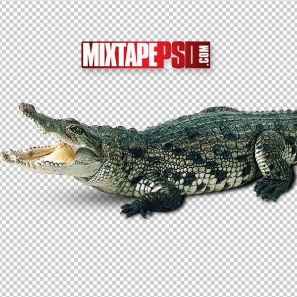 Crocodile Cut PNG, Officialpsds, Officialpsd, png images free, png images transparent background, png images hd, png images for photoshop, png images website, png images for free download, png images download, png images background, png images examples, png images for editing, png images for download, PNG Images
