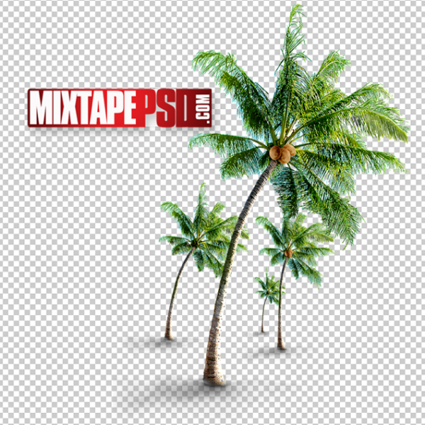 Palm Trees with Coconuts PNG