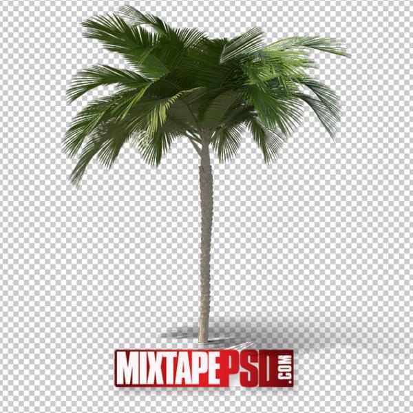 HD Palm Tree 3