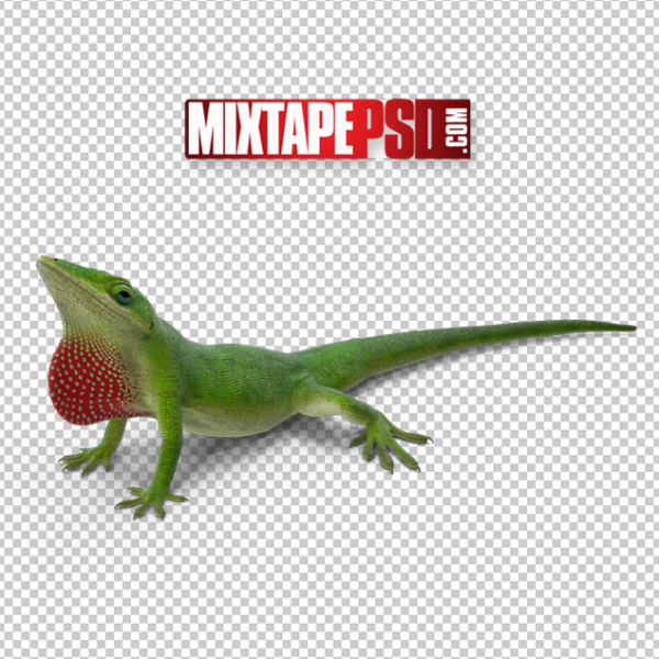 HD Carolina Anole Lizard, PNG Images, Free PNG Images, Png Images Free, PNG Images with Transparent Background, png transparent images, png images gallery, background png images, png background images, images png, free png images download, royalty free ping images