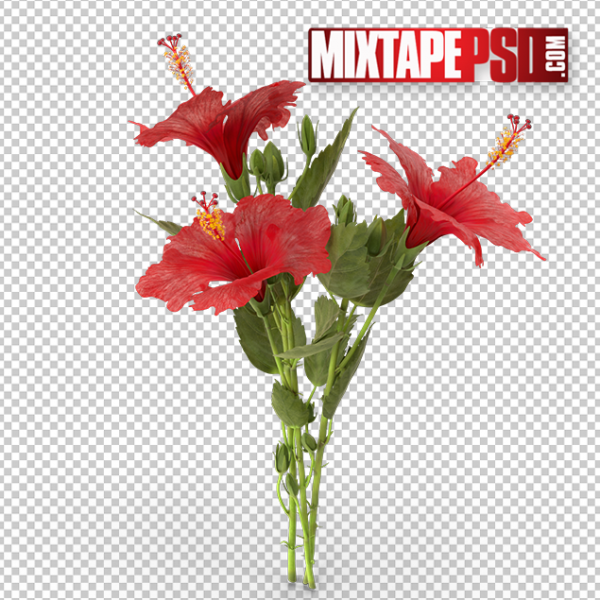 HD Hibiscus Plant, PNG Images, Free PNG Images, Png Images Free, PNG Images with Transparent Background, png transparent images, png images gallery, background png images, png background images, images png, free png images download, royalty free ping images