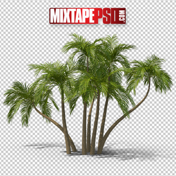 HD Palms Trees 4, PNG Images, Free PNG Images, Png Images Free, PNG Images with Transparent Background, png transparent images, png images gallery, background png images, png background images, images png, free png images download, royalty free ping images