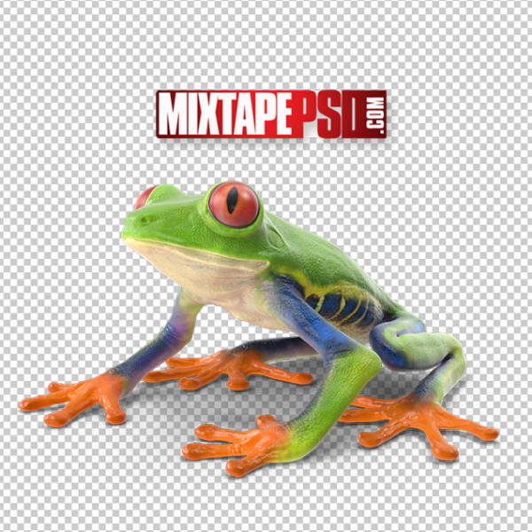 HD Red Eyed Tree Frog, PNG Images, Free PNG Images, Png Images Free, PNG Images with Transparent Background, png transparent images, png images gallery, background png images, png background images, images png, free png images download, royalty free ping images