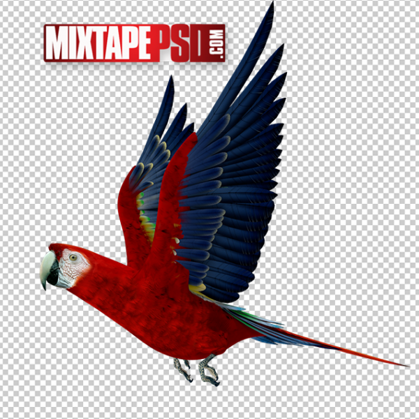 HD Scarlet Macaw Parrot, PNG Images, Free PNG Images, Png Images Free, PNG Images with Transparent Background, png transparent images, png images gallery, background png images, png background images, images png, free png images download, royalty free ping images
