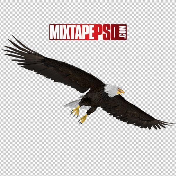 HD Bald Eagle Flying, Background png Images, Free PNG Images, free png images download, images png, png Background Images, PNG Images, Png Images Free, png images gallery, PNG Images with Transparent Background, png transparent images, royalty free png images, Transparent Background