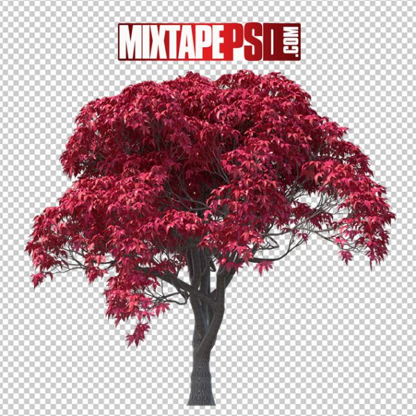 HD Japanese Maple Tree, Background png Images, Free PNG Images, free png images download, images png, png Background Images, PNG Images, Png Images Free, png images gallery, PNG Images with Transparent Background, png transparent images, royalty free png images, Transparent Background