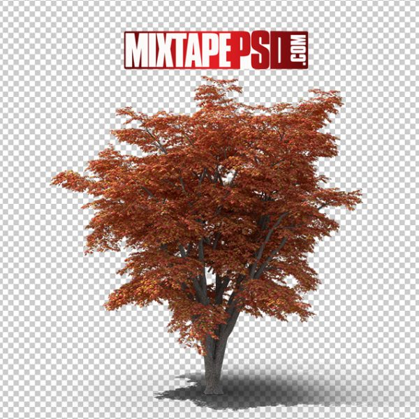 HD Maple Tree, Background png Images, Free PNG Images, free png images download, images png, png Background Images, PNG Images, Png Images Free, png images gallery, PNG Images with Transparent Background, png transparent images, royalty free png images, Transparent Background