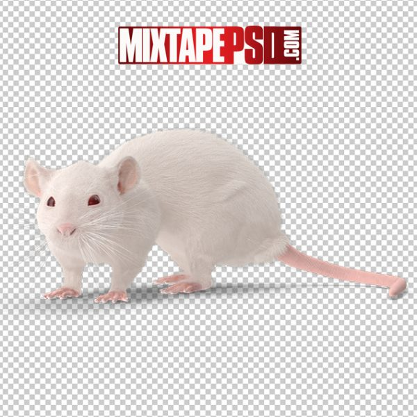 HD White Rat, Background png Images, Free PNG Images, free png images download, images png, png Background Images, PNG Images, Png Images Free, png images gallery, PNG Images with Transparent Background, png transparent images, royalty free png images, Transparent Background
