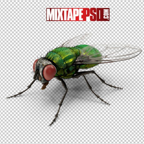 HD Green Bottle Fly 2