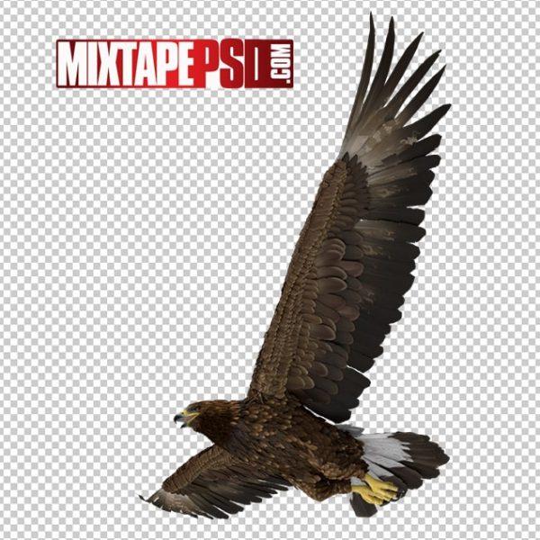 HD Golden Eagle Flying 2