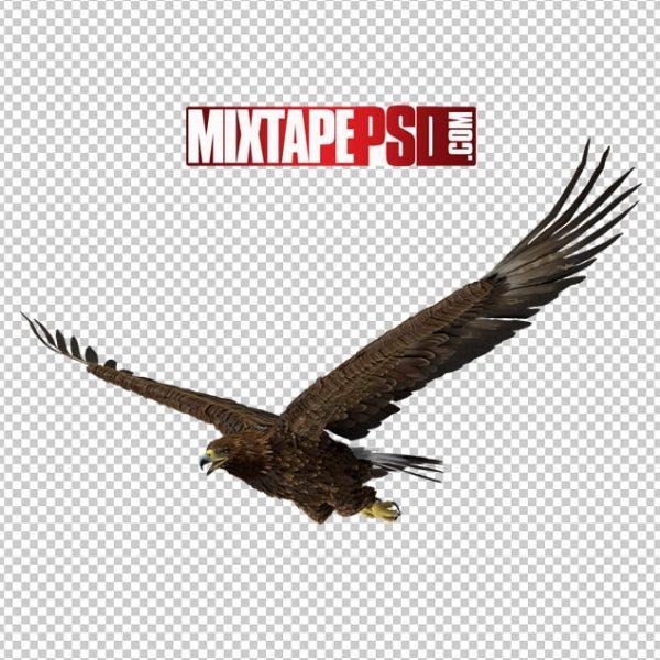 HD Golden Eagle Flying