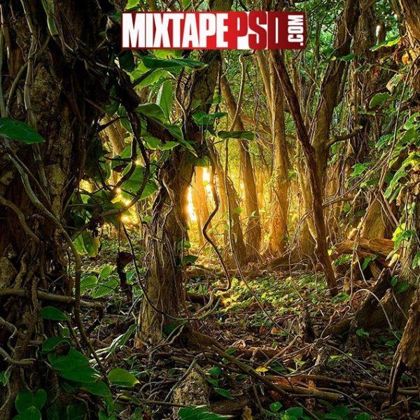 Jungle Background, Aesthetic Backgrounds, Backgrounds, Colorful Backgrounds, Computer Backgrounds, Cool Backgrounds, Desktop Backgrounds, Flyer Backgrounds, Google Backgrounds, HD Backgrounds, Mixtape Background