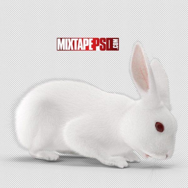 HD White Rabbit Eating