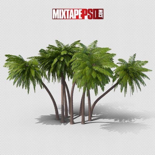 HD Palm Trees 7