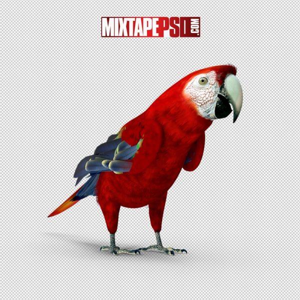 HD Scarlet Macaw