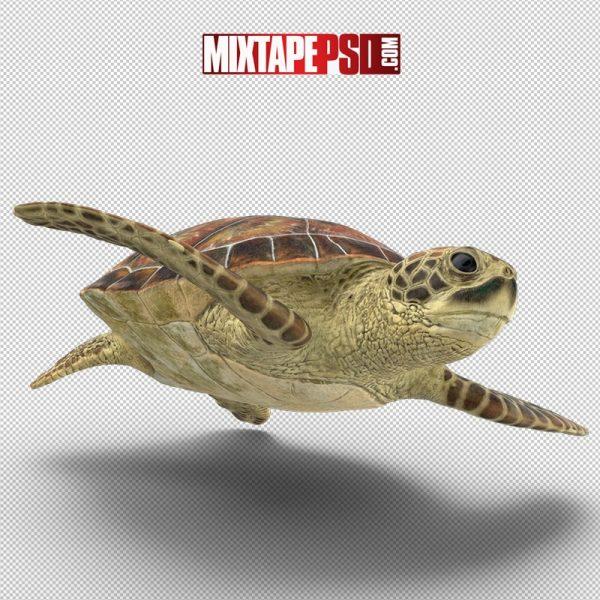 HD Sea Turtle