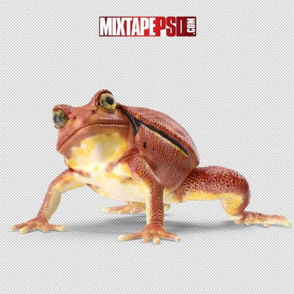 HD Tomato Frog