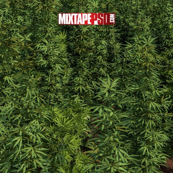 Marijuana Trees Background