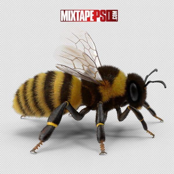 HD Bumblebee 2