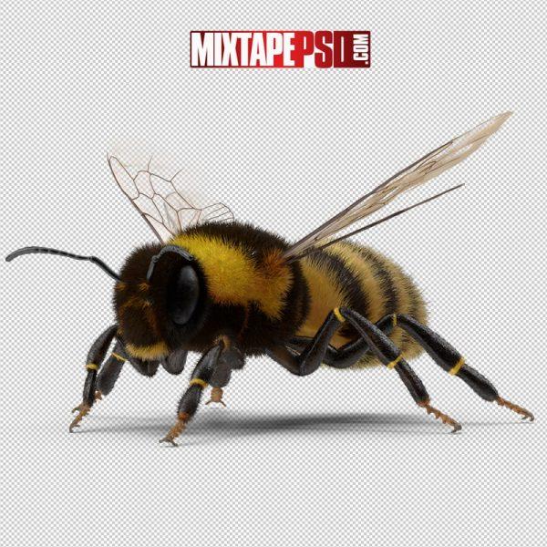HD Bumblebee 3
