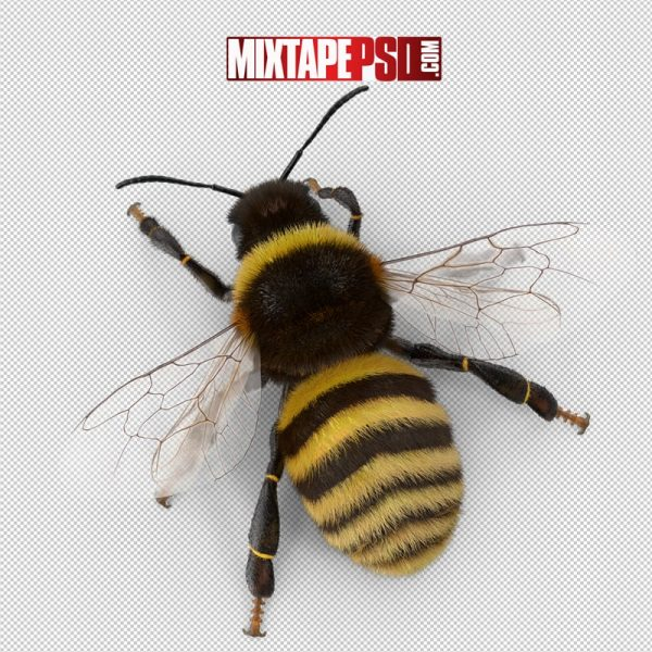 HD Bumblebee