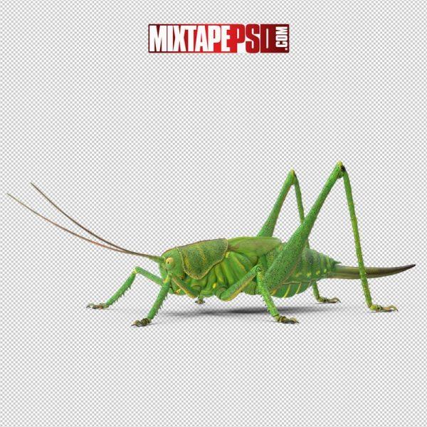 HD Grasshopper