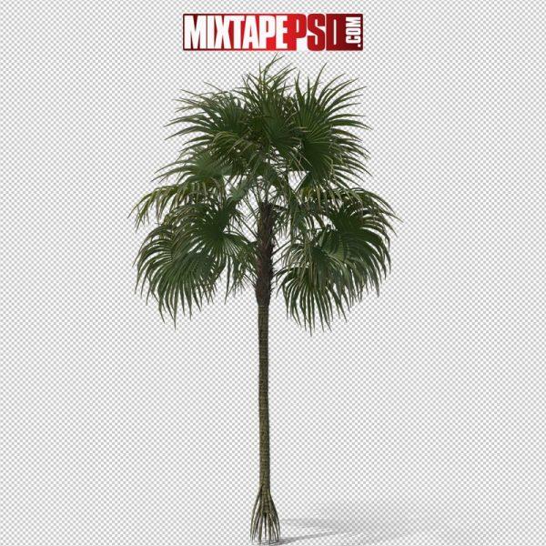 HD Palm Tree Cryosophila 2
