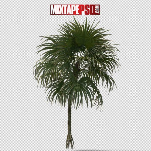 HD Palm Tree Cryosophila