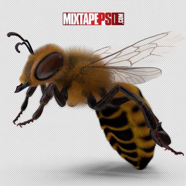 HD Bumblebee 4
