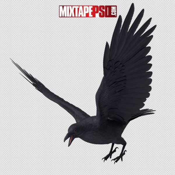 HD Crow Flapping Wings