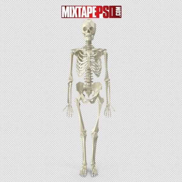 HD Halloween Poly Skeleton